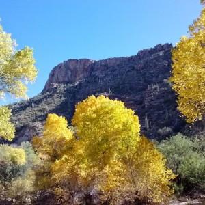 sabino canyon in the fall